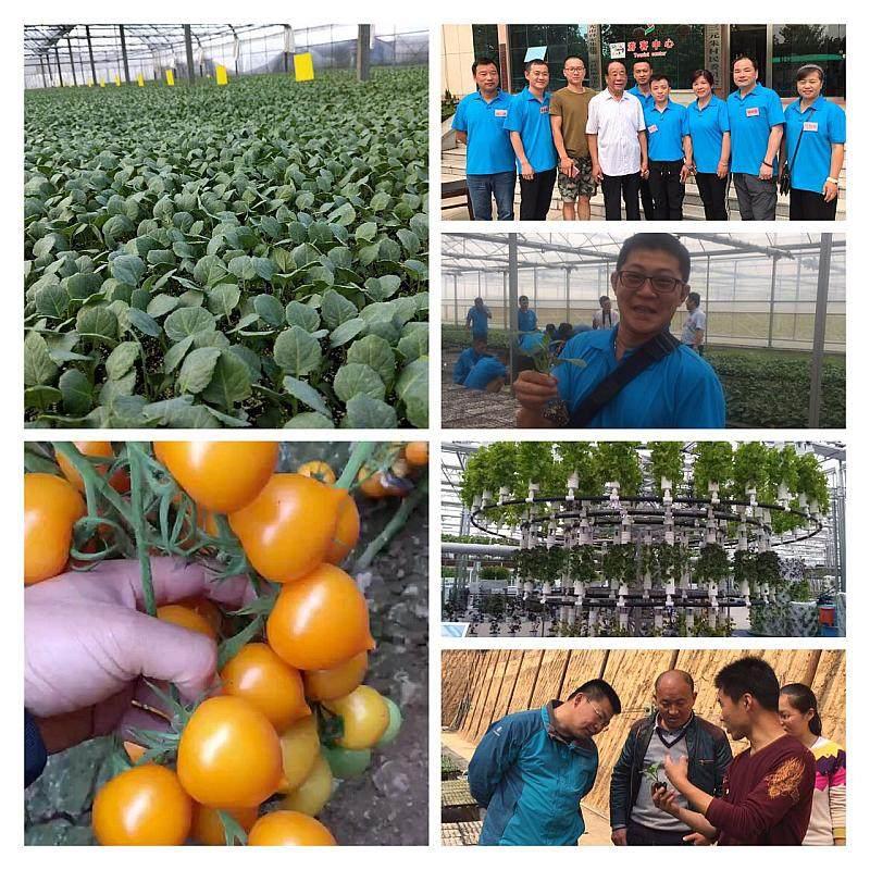 第11期中荷無土栽培之沙培有機蔬菜種植技術培訓班