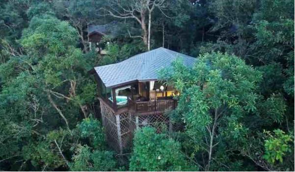 2020冬令营:雨林深处的生物课堂,探秘中国最大的亚热带雨林